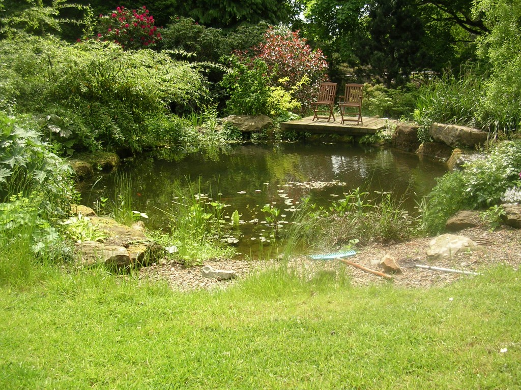 Wildlife pond almond landscapes for Backyard pond animals